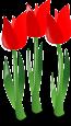 tulips-152041_640